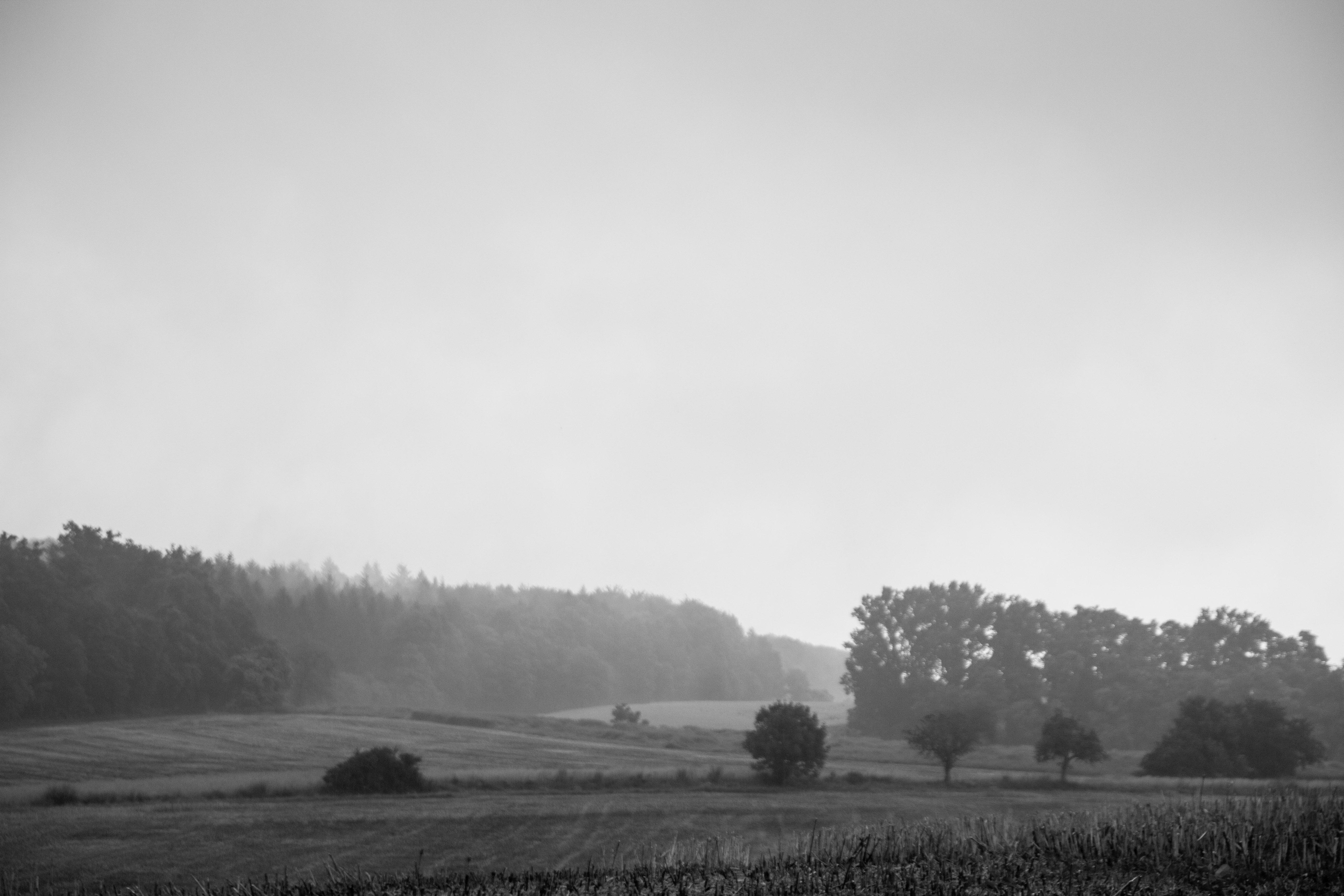 Nußloch - Brunnenfeld - Nebel