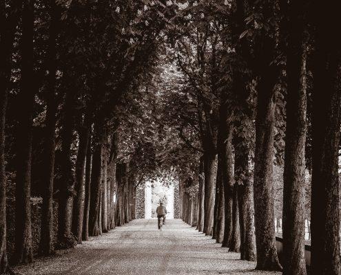 Schloss Schwetzingen - Allee mit Radfahrer - schwarzweiss - Tim Wullbrandt