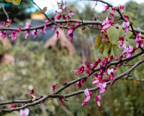 Schloss Schwetzingen - Park - Blumen Tim Wullbrandt